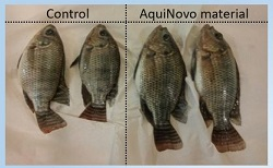 AquiNovo comparison